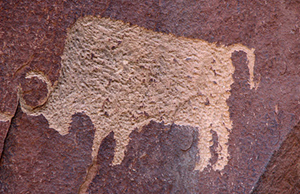 Native Americans carved this bison petroglyph into Wingate sandstone cliffs, now part of Utah's Newspaper Rock State Historical Monument. Today, tribal bison herds are managed on over 1 million acres of tribal lands, mostly in the west.